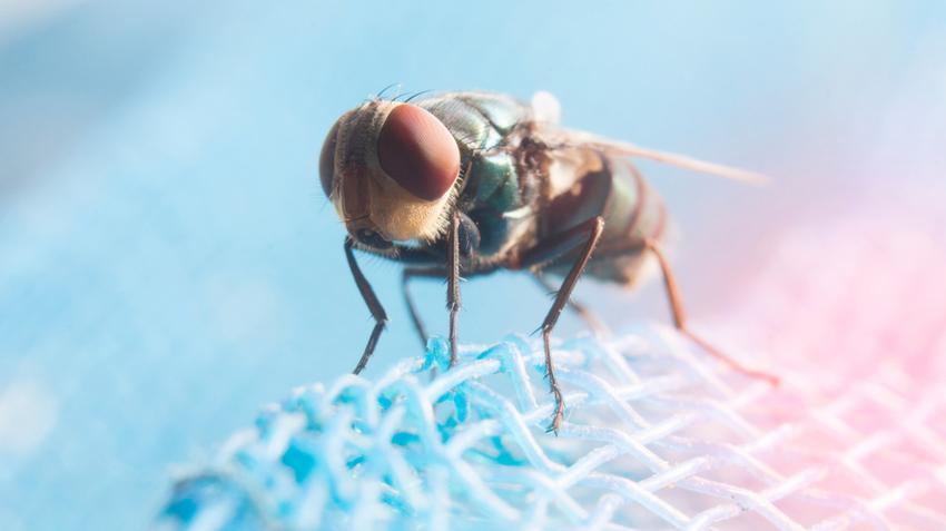 pikkelysömör kezelése tentorium homeopátia gyógyszerek pikkelysömörhöz