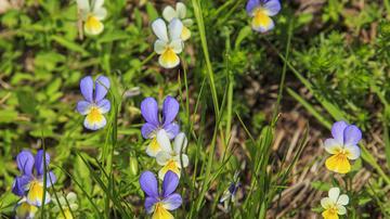 gyógynövényekkel kezelheti a pikkelysmr krém pikkelysömör vagy dermatitis ellen
